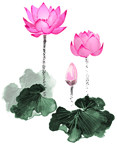 Lotus Flowers Shiatsu